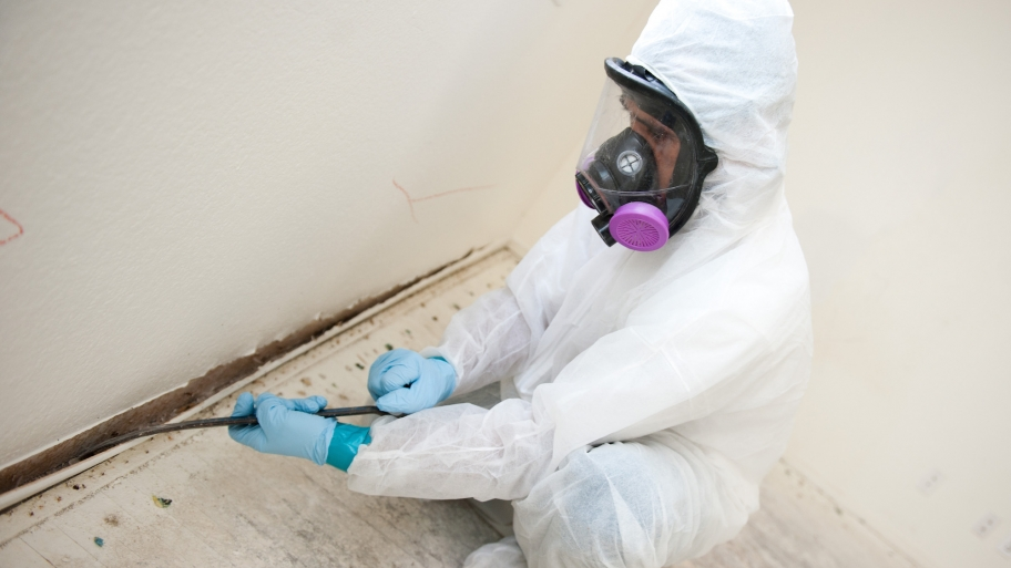 Mold Cleanup Houston